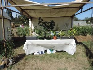 plantes insolites gros plan